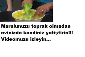 Read more about the article EVDE SUDA MARUL YETİŞTİRME
