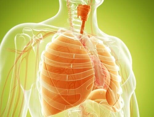 Akciğerleri temizleyen doğal karışım