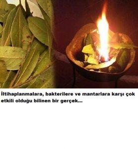 Read more about the article Bu yaprakları 10 dakika yakın ve mucizeye şahit olun